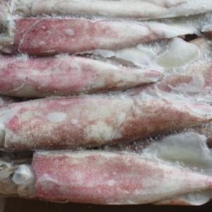 calamar peru1